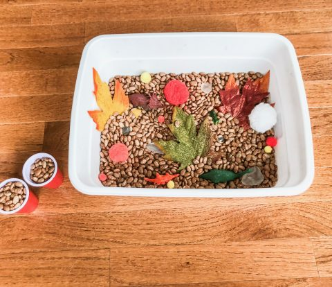 Fall Sensory Bin - A Quick and Easy Kid Activity | Rock It Mama | Make this fall sensory bin just in time for the season! This cheap and fun activity is great for learning and discovering the senses